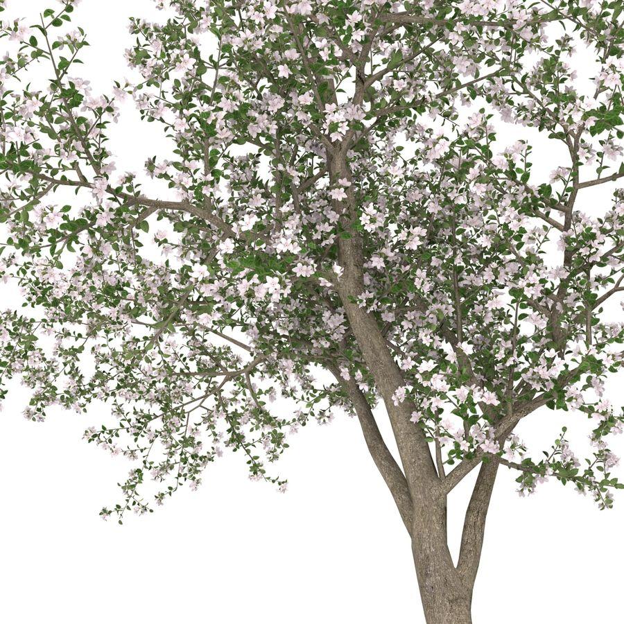 꽃 사과 나무 royalty-free 3d model - Preview no. 29