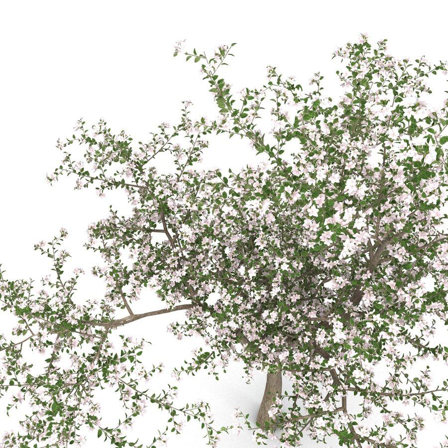 꽃 사과 나무 royalty-free 3d model - Preview no. 16