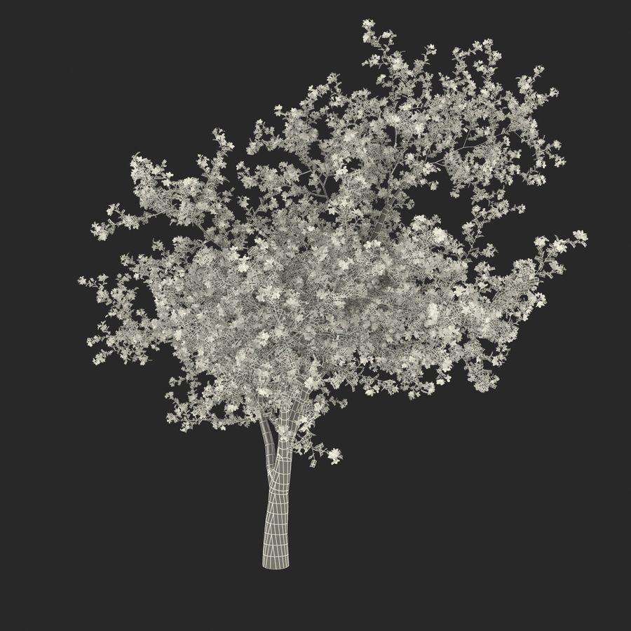꽃 사과 나무 royalty-free 3d model - Preview no. 32