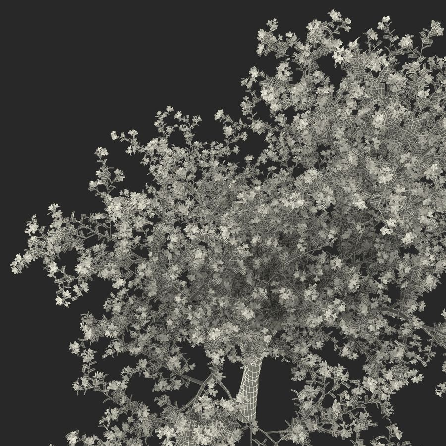 꽃 사과 나무 royalty-free 3d model - Preview no. 39
