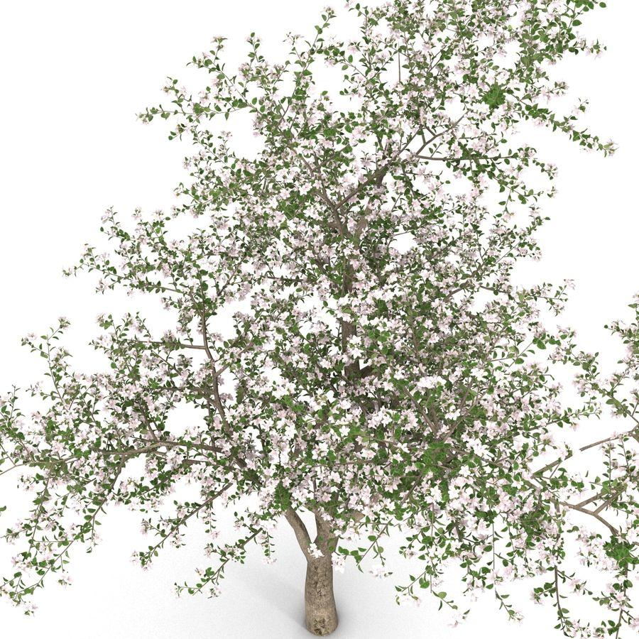 꽃 사과 나무 royalty-free 3d model - Preview no. 13