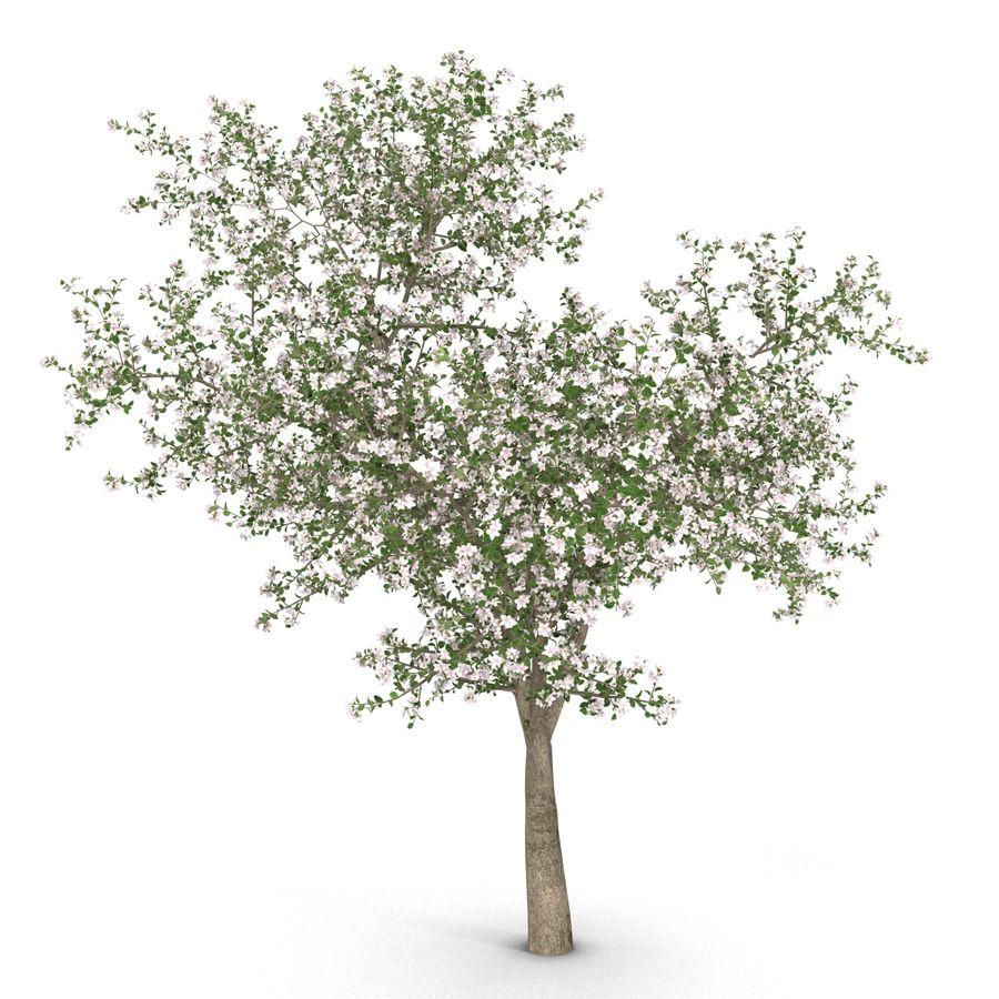 꽃 사과 나무 royalty-free 3d model - Preview no. 10