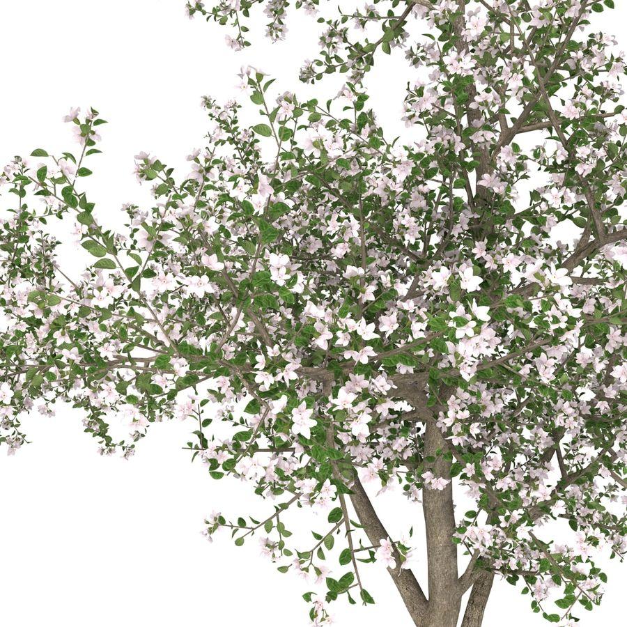 꽃 사과 나무 royalty-free 3d model - Preview no. 19