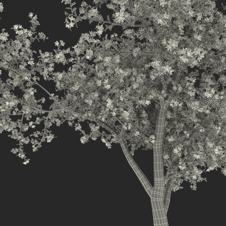 꽃 사과 나무 royalty-free 3d model - Preview no. 43