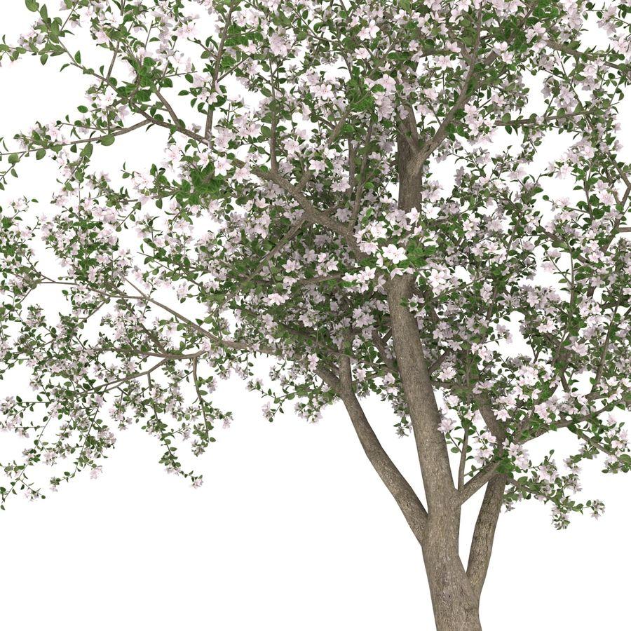 꽃 사과 나무 royalty-free 3d model - Preview no. 27