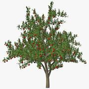 사과 나무 3d model