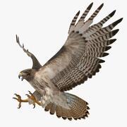 Buteo Jamaicensis 'Falco dalla coda rossa' 3d model