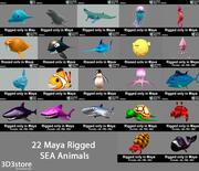 Animali marini 3d model