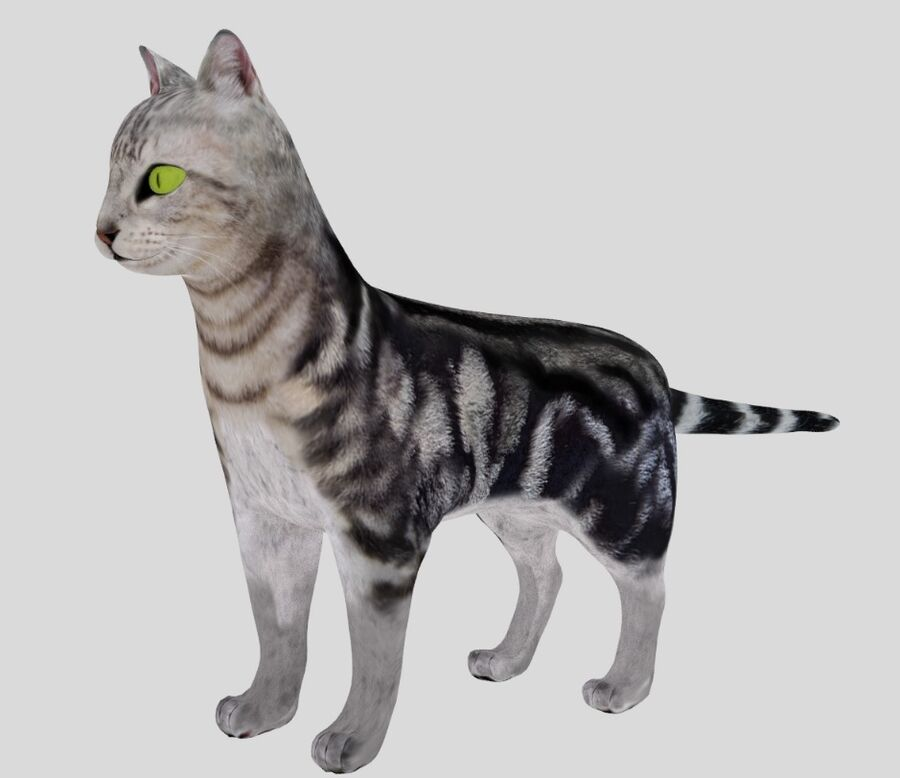 American Shorthair Cat royalty-free 3d model - Preview no. 1