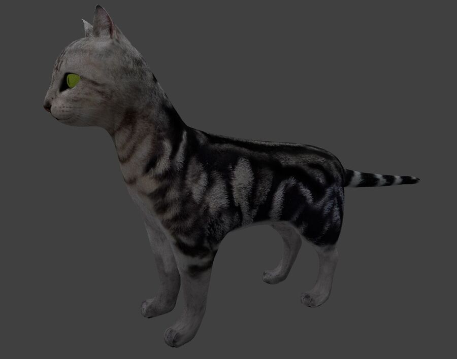 American Shorthair Cat royalty-free 3d model - Preview no. 7