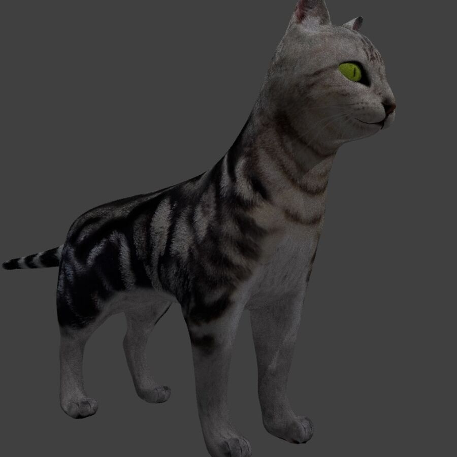 American Shorthair Cat royalty-free 3d model - Preview no. 5