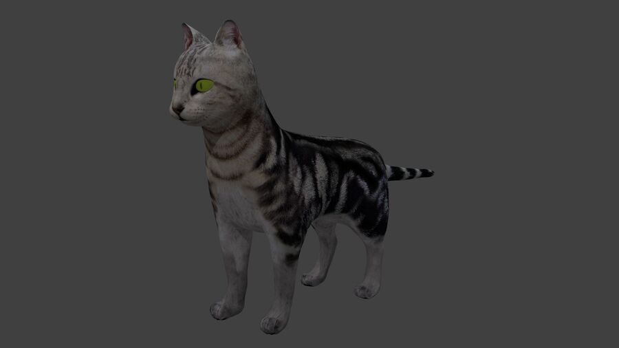 American Shorthair Cat royalty-free 3d model - Preview no. 2