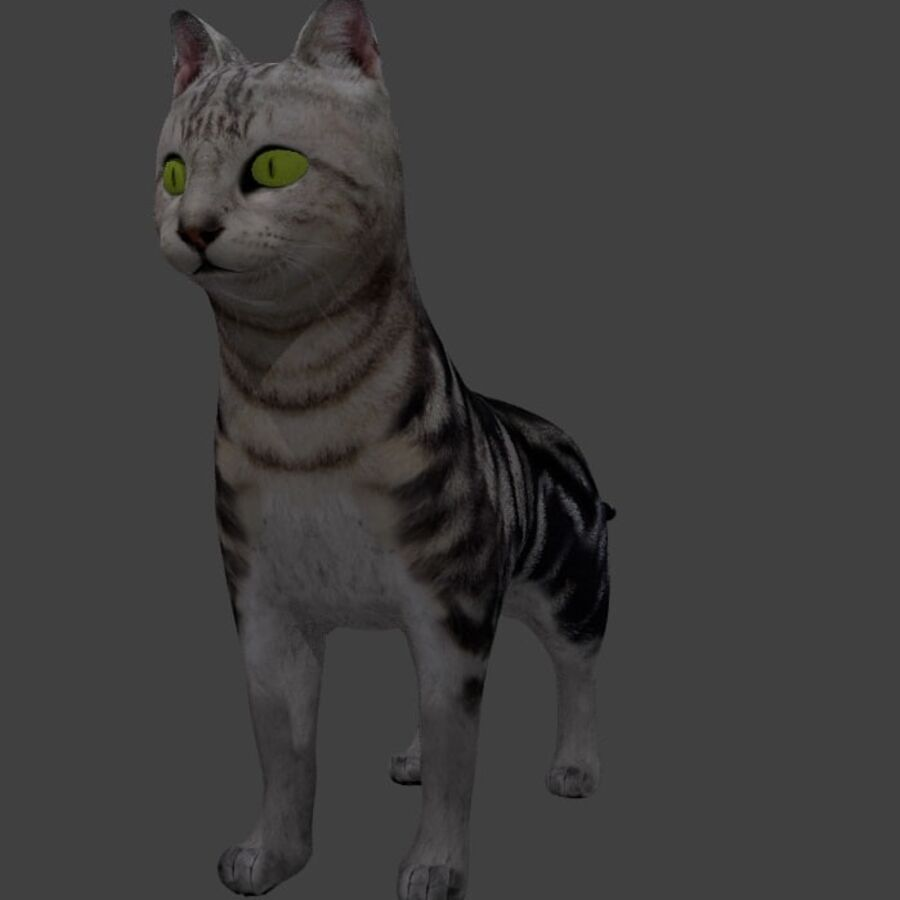 American Shorthair Cat royalty-free 3d model - Preview no. 4