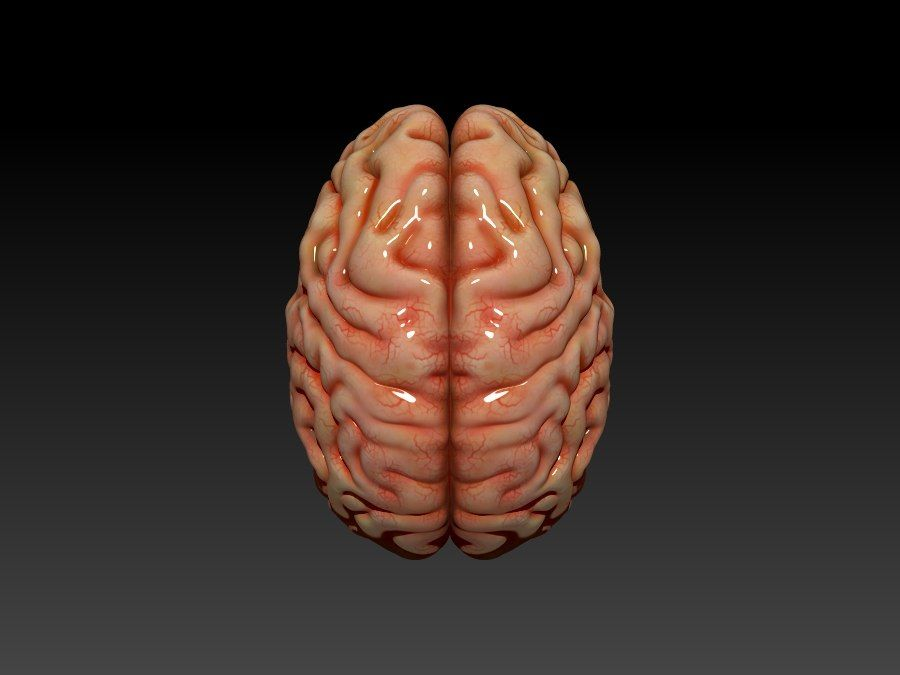 Brain royalty-free 3d model - Preview no. 5