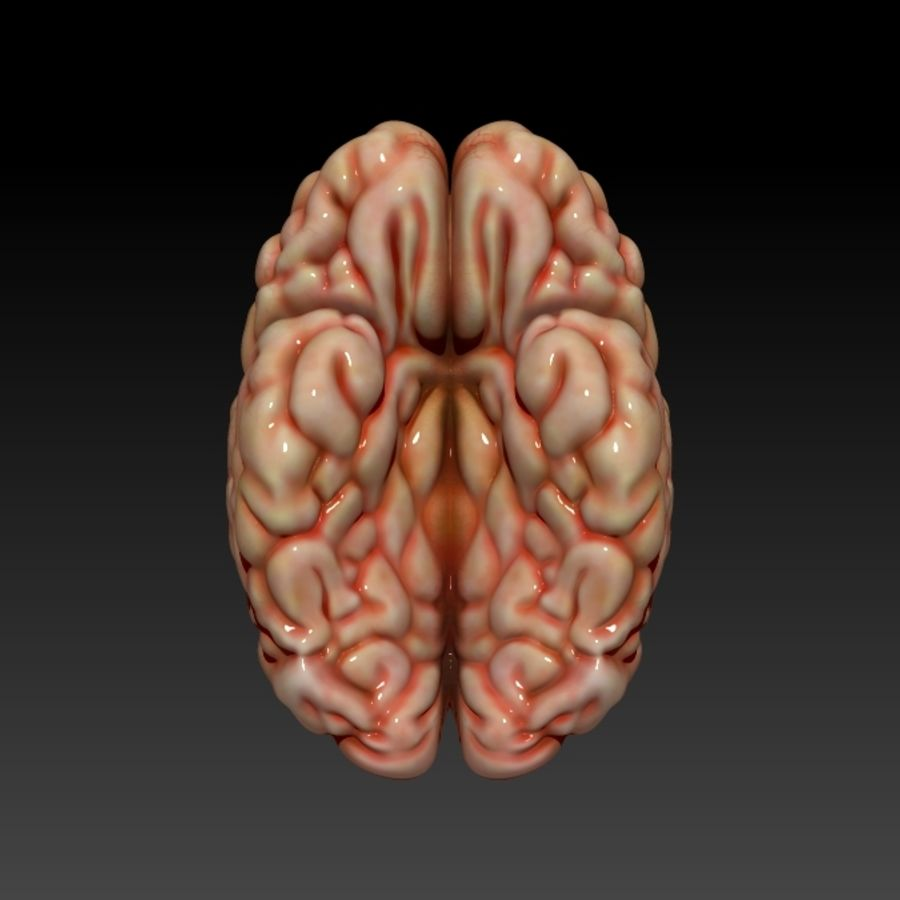 Brain royalty-free 3d model - Preview no. 4