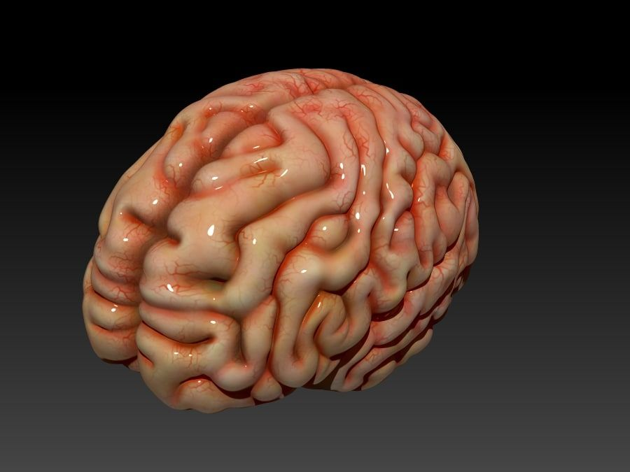 Brain royalty-free 3d model - Preview no. 1