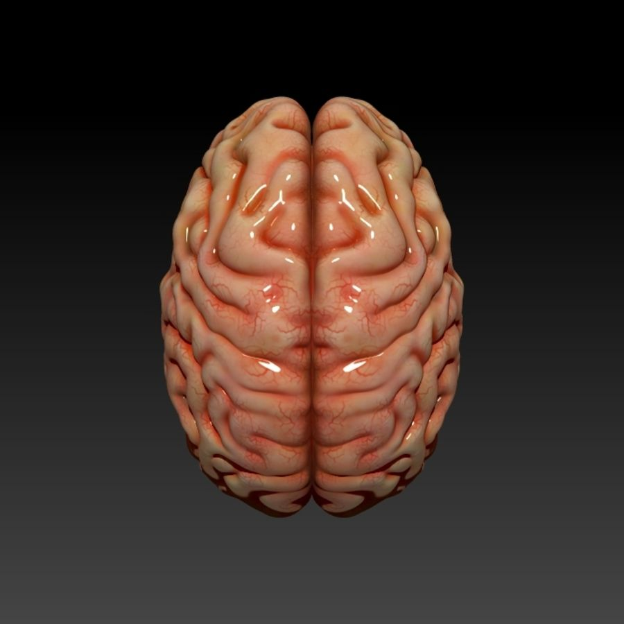 뇌 royalty-free 3d model - Preview no. 5