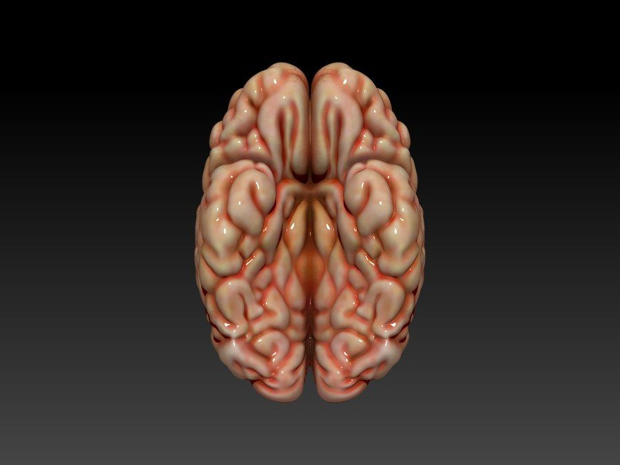 Cerveau royalty-free 3d model - Preview no. 4