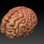 Cervello 3d model