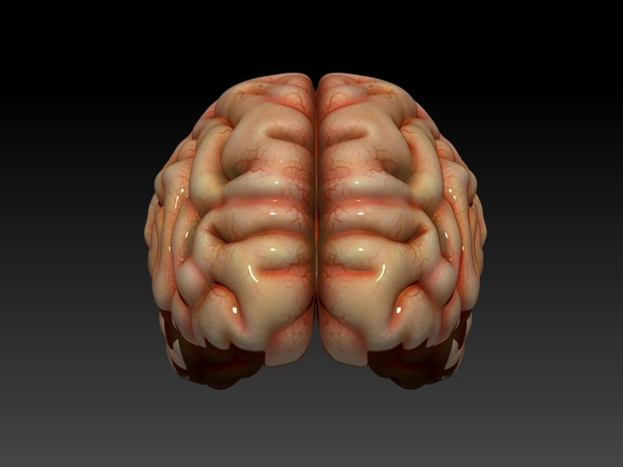 Cerveau royalty-free 3d model - Preview no. 3