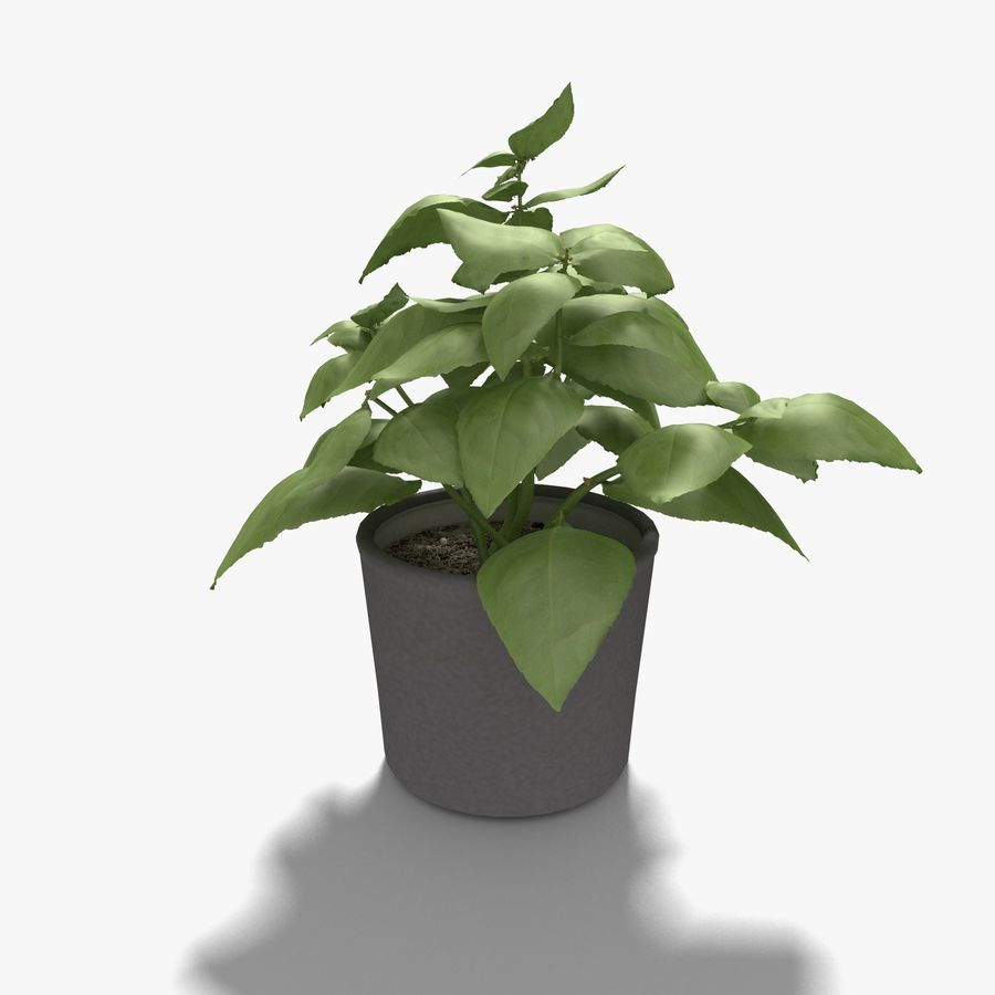 Plant in a pot royalty-free 3d model - Preview no. 2