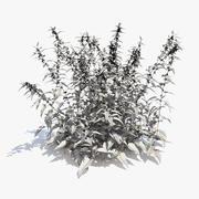 Common Nettle Grass 3d model