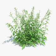 Common Nettle Grass 3d model