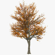 Autumn Tree Yellow Red Foliage deciduous 3d model
