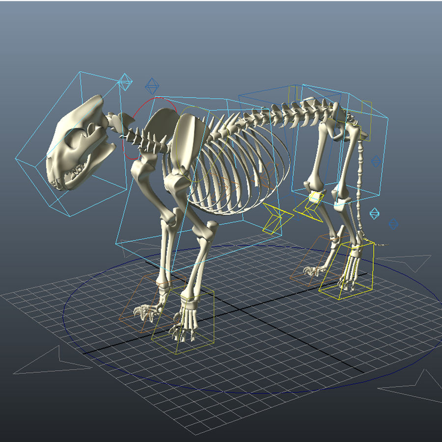 Lion Skeleton (RIG) royalty-free 3d model - Preview no. 3