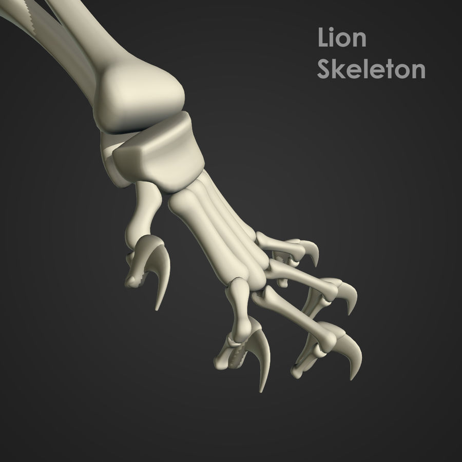 Lion Skeleton (RIG) royalty-free 3d model - Preview no. 10
