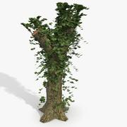 アイビー覆われた木の切り株 3d model
