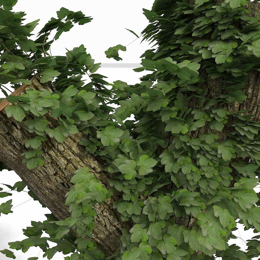 Coto de árvore coberto de Ivy royalty-free 3d model - Preview no. 10