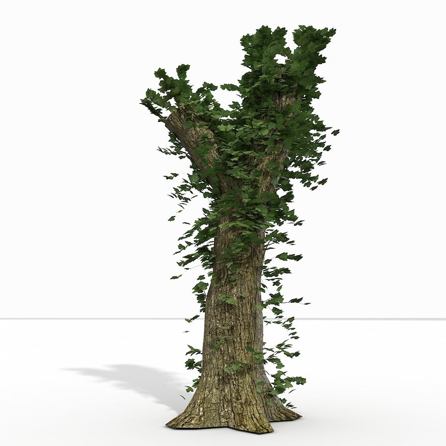 Coto de árvore coberto de Ivy royalty-free 3d model - Preview no. 9