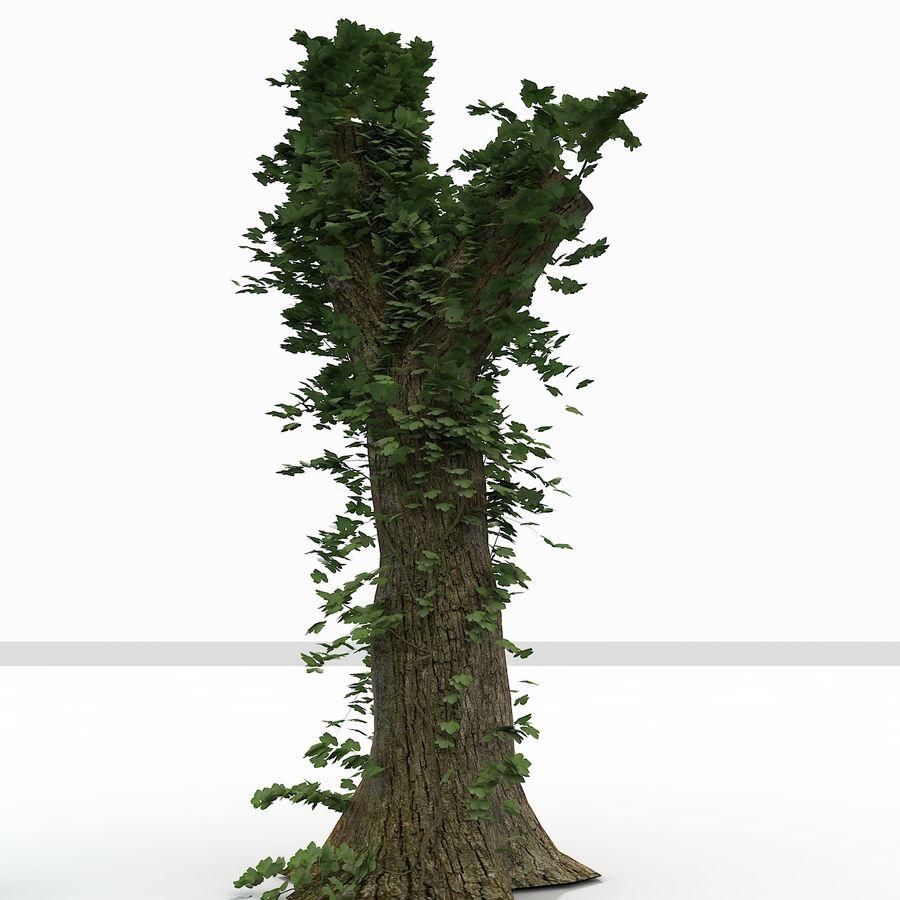 Coto de árvore coberto de Ivy royalty-free 3d model - Preview no. 5