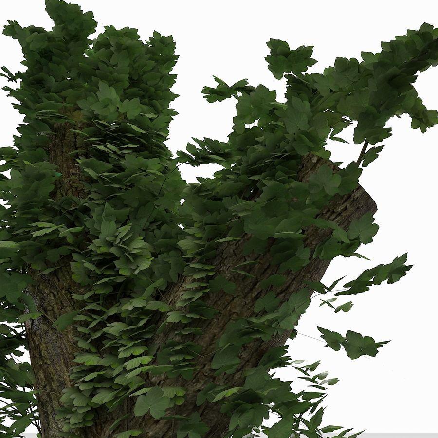 Coto de árvore coberto de Ivy royalty-free 3d model - Preview no. 6