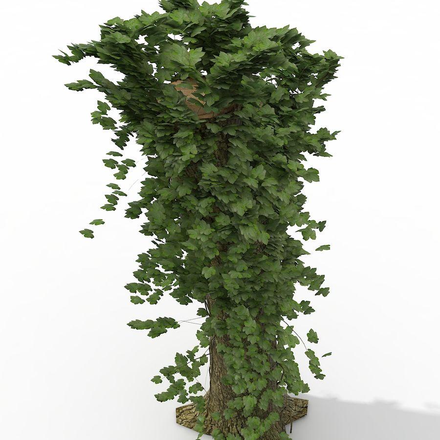 Coto de árvore coberto de Ivy royalty-free 3d model - Preview no. 8