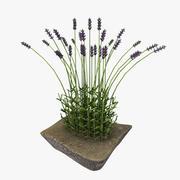 Buisson de lavande 3d model