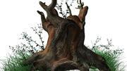 树桩 3d model