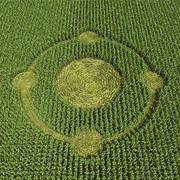 Cerchio nel grano 3d model