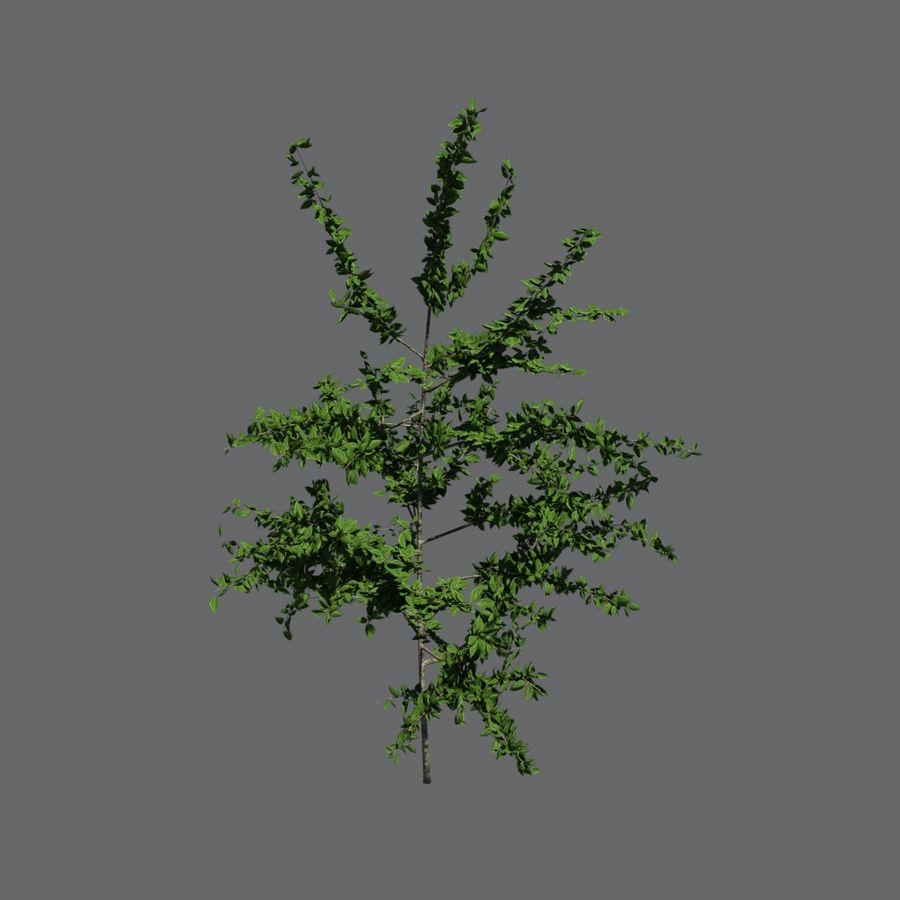 Träd royalty-free 3d model - Preview no. 1