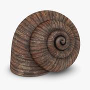 Snail Shell 3d model