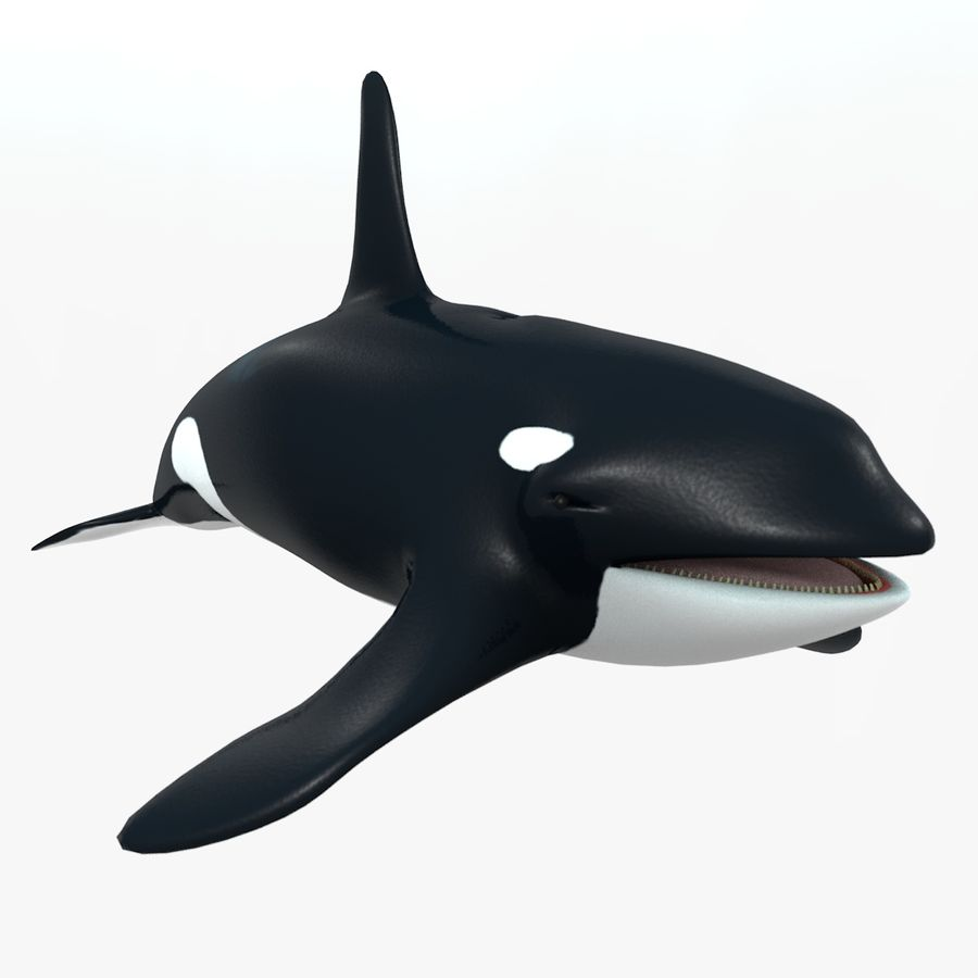 Orca royalty-free 3d model - Preview no. 8