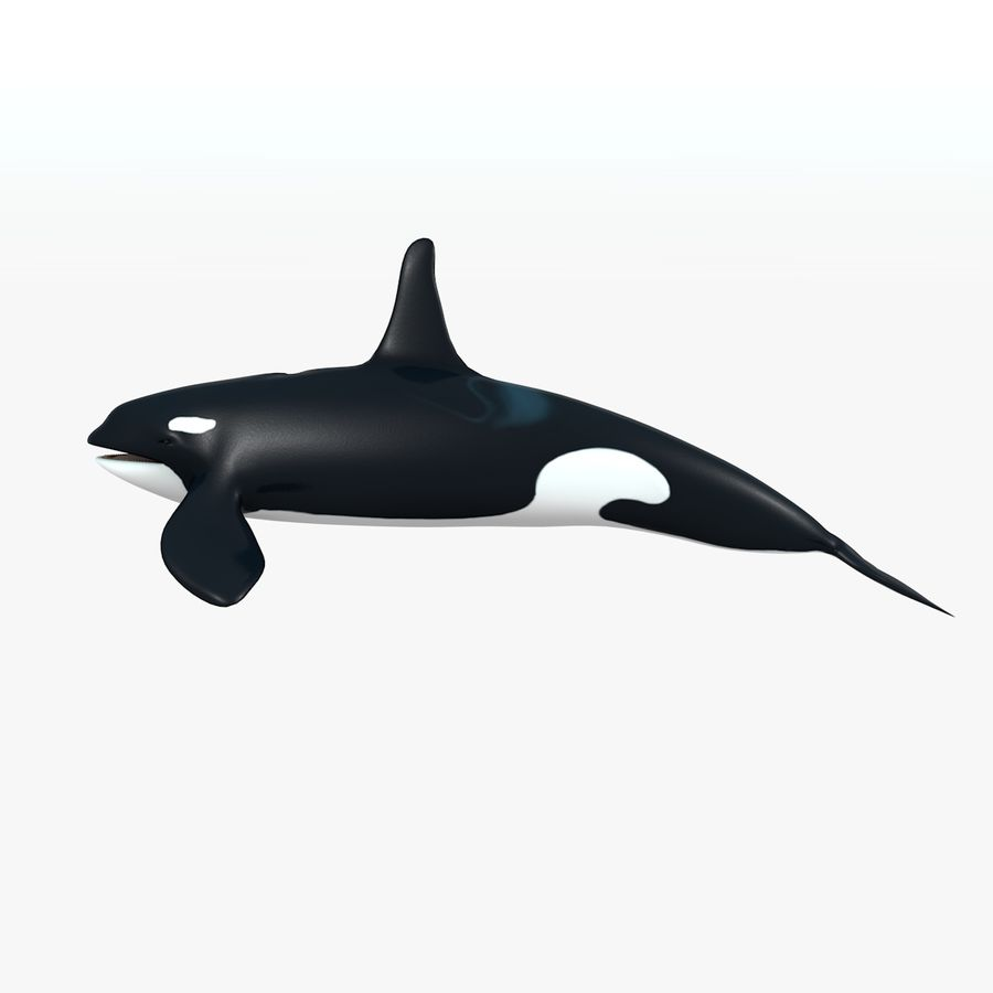 Orca royalty-free modelo 3d - Preview no. 1