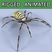 Spider (Argiope bruennichi) 3d model
