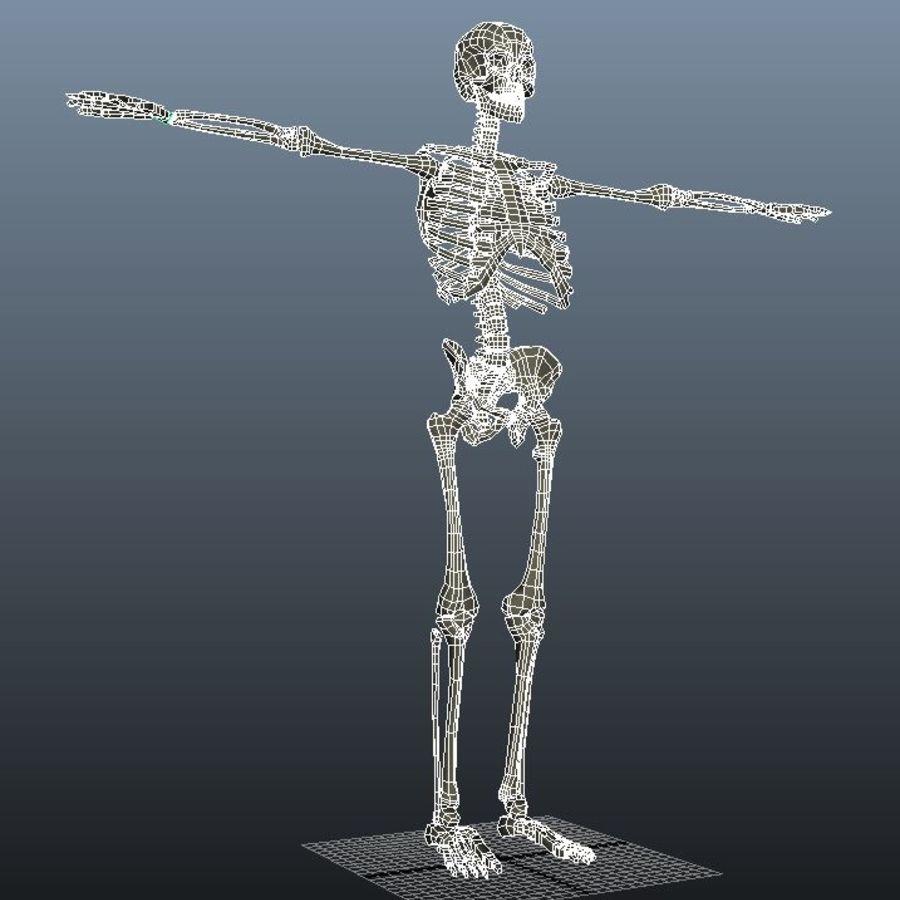 Animowany Szkielet royalty-free 3d model - Preview no. 2
