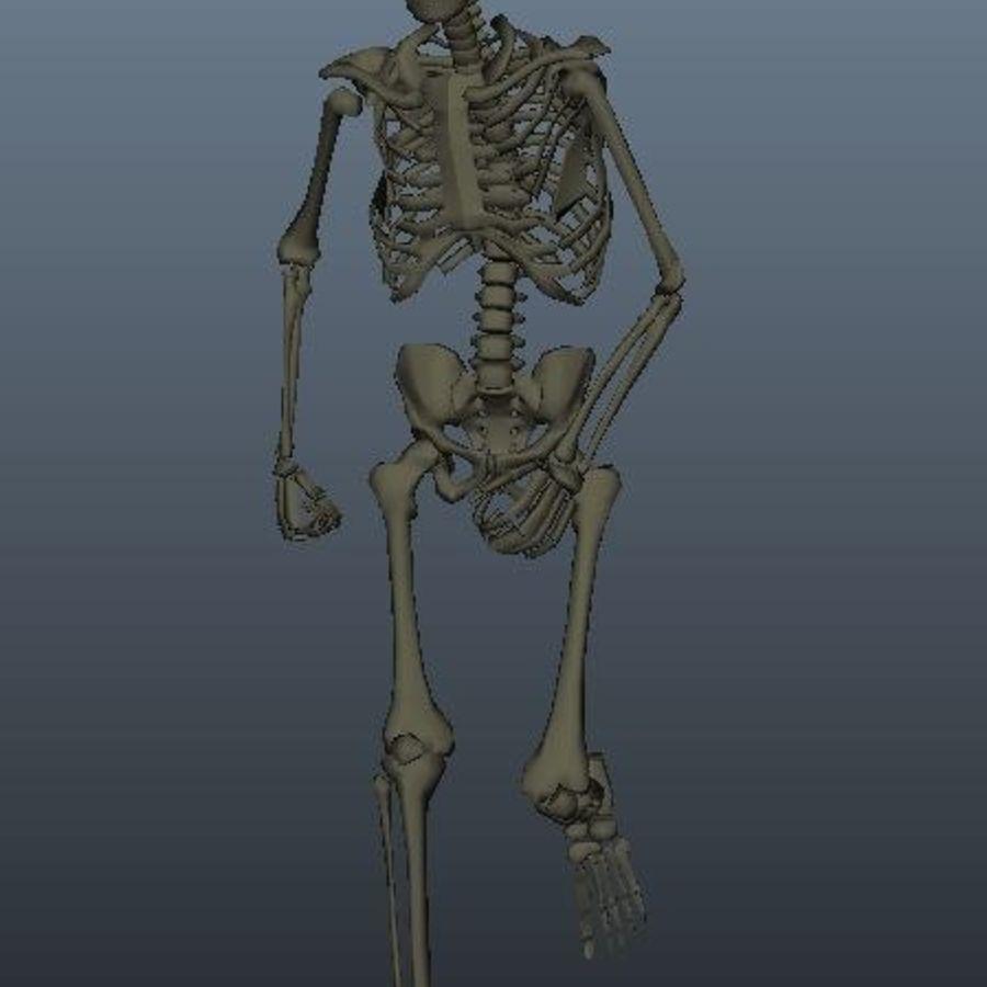 Animowany Szkielet royalty-free 3d model - Preview no. 3
