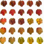 Осеннее плющевое красочное лазанье 3d model