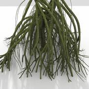 정글 늪 거대한 나무 뿌리 구조 3d model