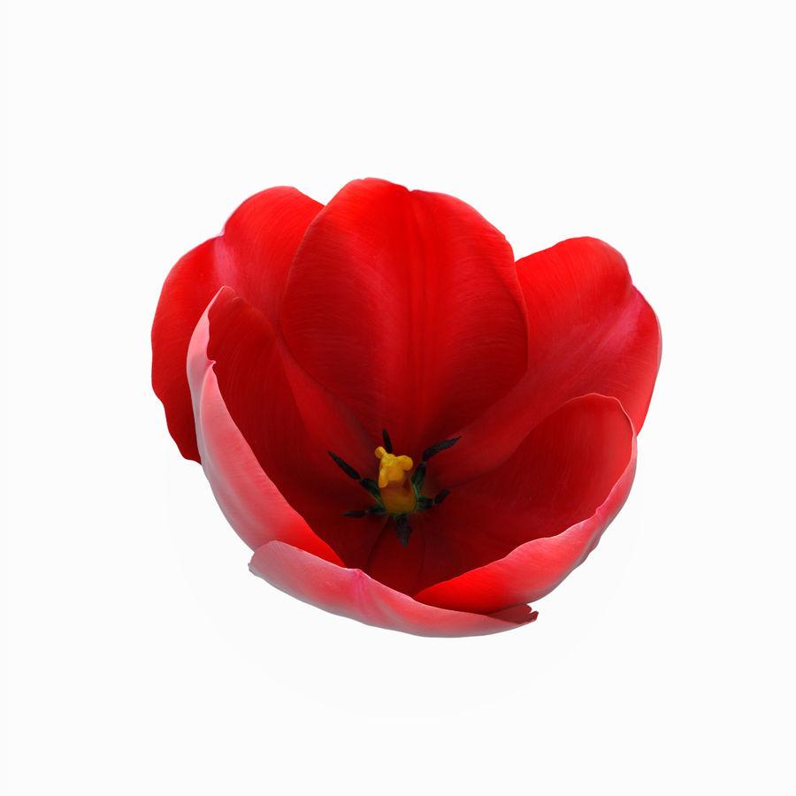 Fleurs de tulipe royalty-free 3d model - Preview no. 10
