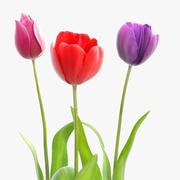Fleurs de tulipe 3d model